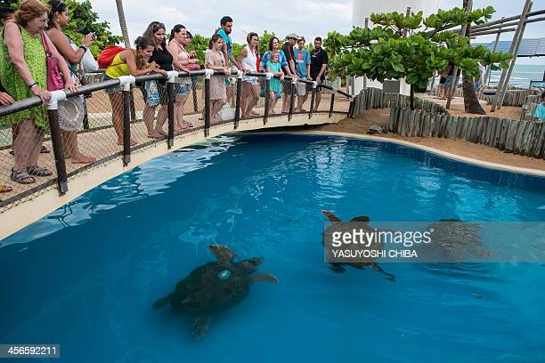Visitors look at loggerhead sea turtles at the Tamar Project headquarters in Praia do Forte Bahia state Brazil on December 13 2013 The Tamar Project...
