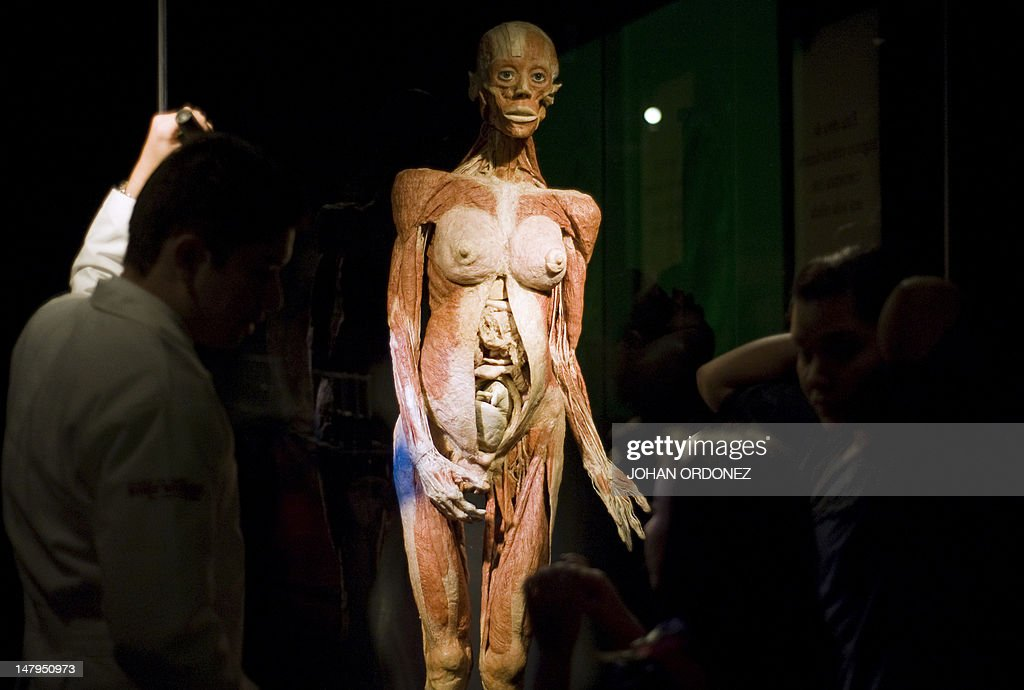 Visitors look at plastinated human bodie Pictures | Getty Images