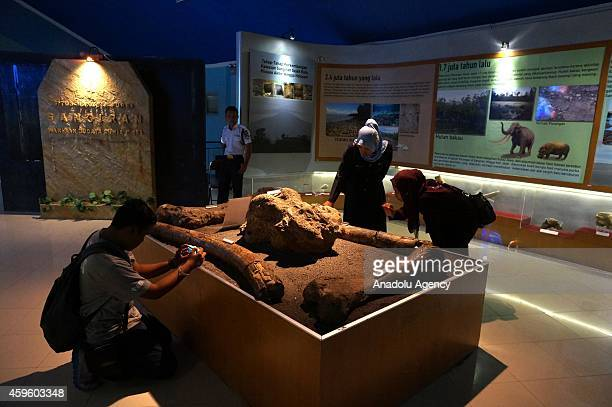 Visitors look at the collection of the Sangiran Museum near Sangiran Early Man Site situated about 15 kilometers in the north of Solo town in Central...
