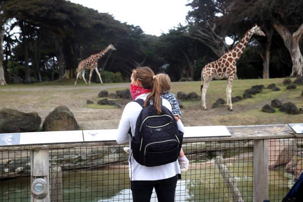 CA: San Francisco Zoo Reopens Amid Coronavirus Pandemic