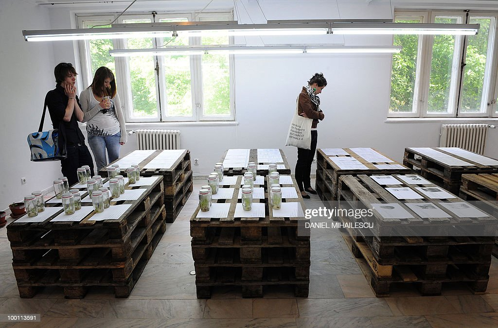 Visitors look at the installation 'Small potatoes make big noise' by artist Asa Sonjasdotter at the International Biennial of Contemporary Art in Bucharest on May 21, 2010. Forty artists from among others the United States, Germany, Sweden and Great Britain participate in this year's Biennale which runs until July 25 in the Romanian capital.