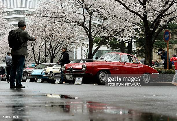 Visitors look at vintage cars underneath cherry blossom trees including Alfa Romeo Giulia Sprint Speciale during the Japan Classic Automobile 2016...