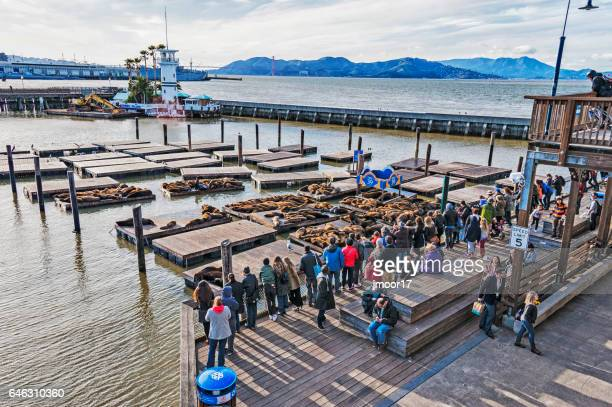 pier 39 stock photos and pictures getty images