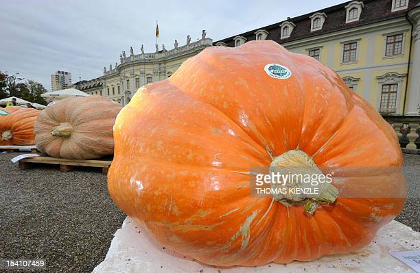 Visitors of the European Pumpkin Championship for the heaviest pumpkin look at the exhibited giant pumpkins at the Baroque Castle in Ludwigsburg...