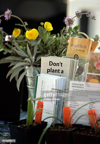 Visitors of the Hollywood Farmers Market take a look and can buy California native plants at the Theadore Payne Growers Foundation booth Volunteers...