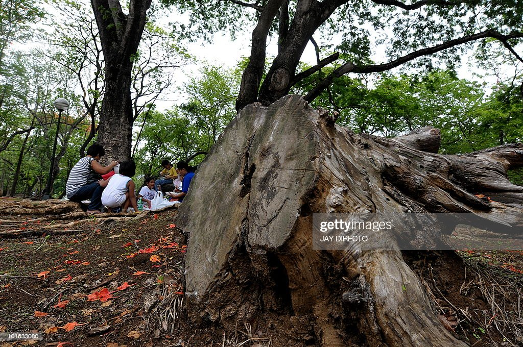 Visitors picnic at the back of a dead tree at the Ninoy Aquino Park during World Environment Day in Quezon City, suburban Manila on June 5, 2010. The World Environment Day, commemorated each year on June 5, is one of the principal vehicles through which the United Nations stimulates worldwide awareness of the environment and enhances political attention and action.