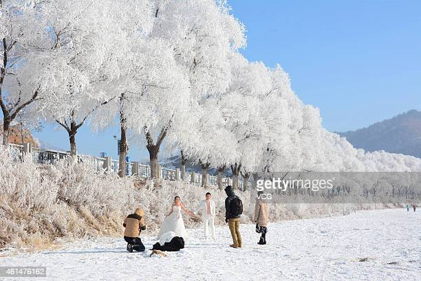 Visitors pose as beautful soft rime scenery falls at the bank of Songhua River on January 12 2015 in Jilin Jilin province of China