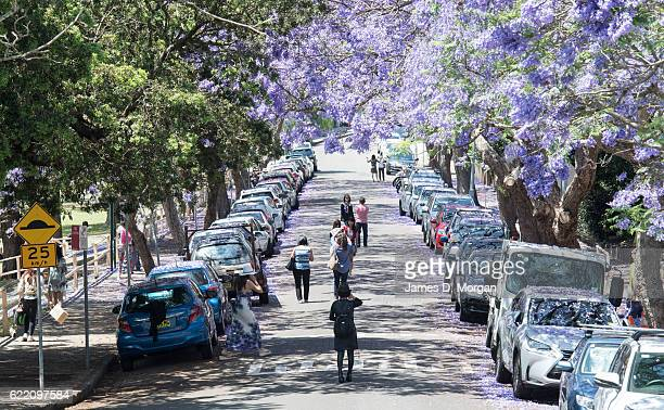 Visitors pose for photographs on McDougall Street in the north Sydney suburb of Kirribilli on November 10 2016 in Sydney Australia Jacaranda trees...