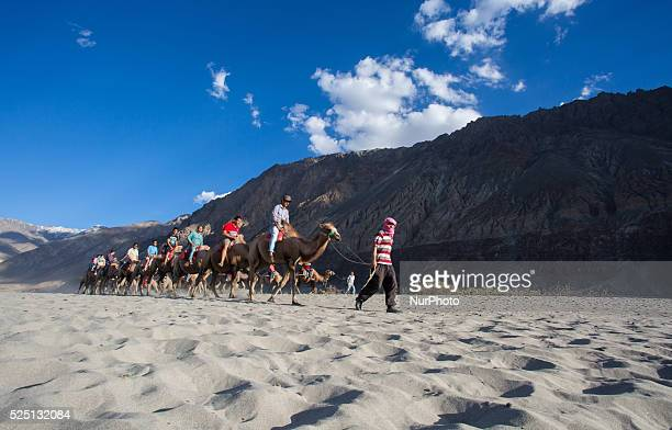 Visitors ride on Doublehumped Bactrian camels at Sand Dunes leisure park at Nubra Valley in Ladakh India on August 14 2015