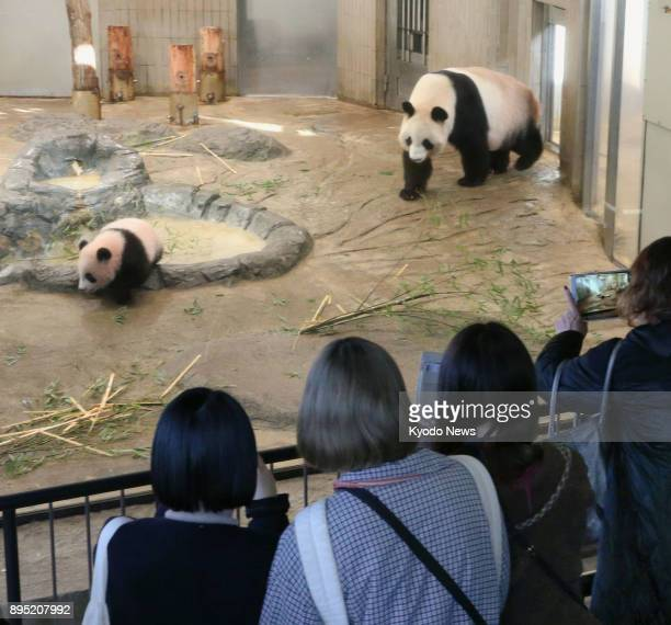 Visitors selected by lottery watch baby giant panda Xiang Xiang and her mother Shin Shin inside an enclosure during the cub's public debut at Ueno...