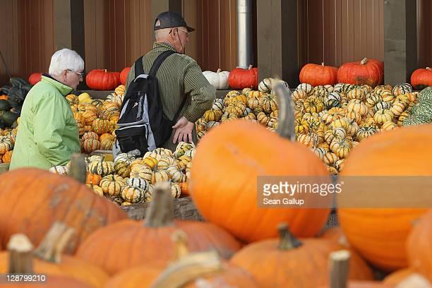 German pumpkin farm - news.yahoo.com