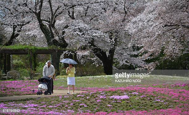 Visitors stroll in a garden of cherry blossoms in full bloom in Tatebayashi about 75 kilometers North of Tokyo April 8 2016 Viewing cherry blossoms...
