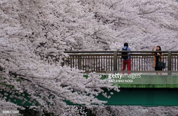 Visitors take a photograph alongisde cherry blossoms in full bloom in the Japanese capital Tokyo on March 27 2018 / AFP PHOTO / Kazuhiro NOGI