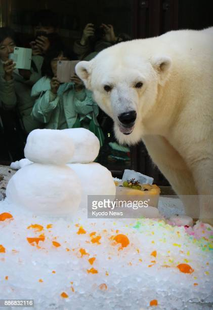 Visitors take photos of a female polar bear on her 18th birthday at Tobe Zoological Park in Ehime Prefecture Japan on Dec 2 2017 ==Kyodo