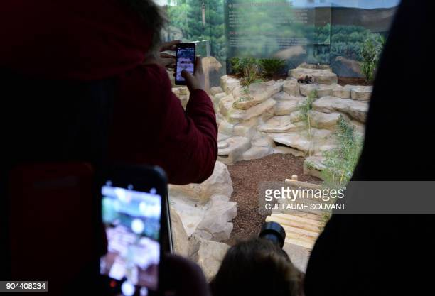 Visitors take pictures of the panda cub named Yuan Meng inside its new enclosure for its first public appearance on January 13 2018 at The Beauval...