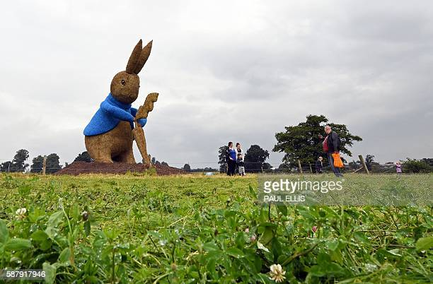 Visitors to an ice cream farm near Nantwich north west England look at a 38ft tall straw sculpture of the Beatrix Potter character 'Peter Rabbit' on...