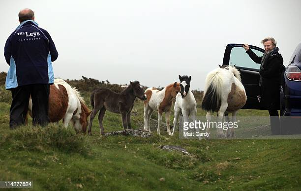 Visitors to Dartmoor stop to look at Dartmoor Hill ponies and their recent foals on Dartmoor on May 17 2011 in Princetown England Although a tourist...