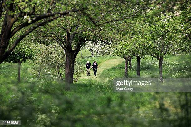 Visitors to Glastonbury Abbey enjoy the apple blossom and other flowering trees as they walk through the orchard on May 4 2011 in Glastonbury England...