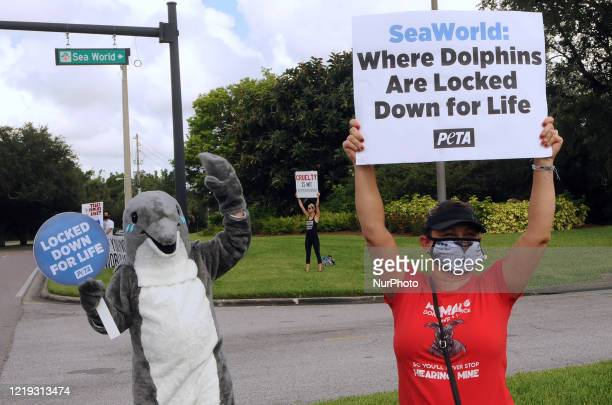 Visitors to SeaWorld Orlando are met by PETA activists protesting the theme park's treatment of killer whales and dolphins as the attraction reopens...
