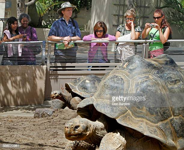 DIEGO CA Visitors to the new Galapagos tortoise enclosure at the San Diego Zoo two of the ancient slow moving animals Tortoises are the oldest...