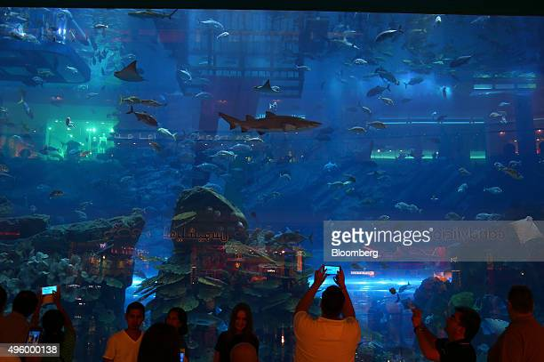 Visitors use their smartphones to photograph fish in the giant aquarium at the Dubai Mall operated by Emaar Malls Group in the downtown district of...