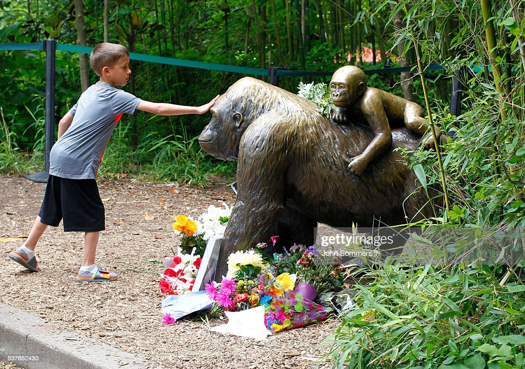 Visitors view a bronze statue of a gorilla and her baby surrounded by flowers outside the Cincinnati Zoo 's Gorilla World exhibit days after a 3-year-old boy fell into the moat and officials were forced to kill Harambe, a 17-year-old Western lowland silverback gorilla June 2, 2016 in Cincinnati, Ohio. The exhibit is still closed as zoo officials work to upgrade safety features of the exhibit.