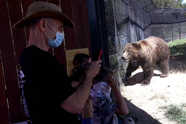 CA: Oakland Zoo Opens To Public Despite California's Rising Coronavirus Infections