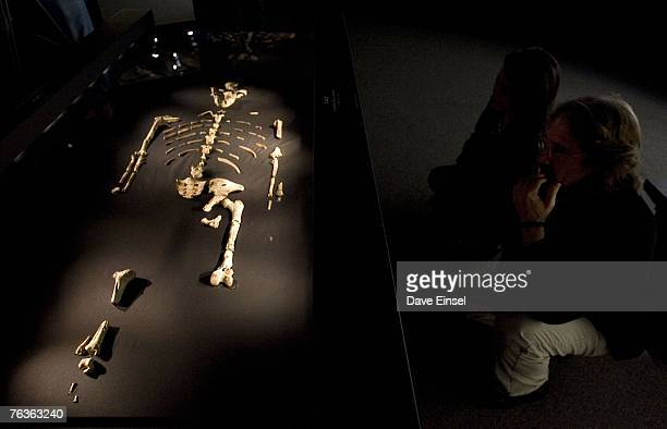 Visitors view the 32 million year old fossilized remains of Lucy the most complete example of the hominid Australopithecus afarensis at the Houston...