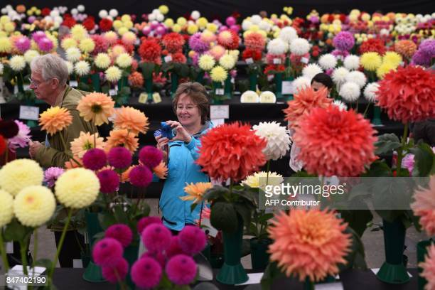 Visitors view the dahlia flowers on display on the first day of the Harrogate Autumn Flower Show held at the Great Yorkshire Showground in Harrogate...