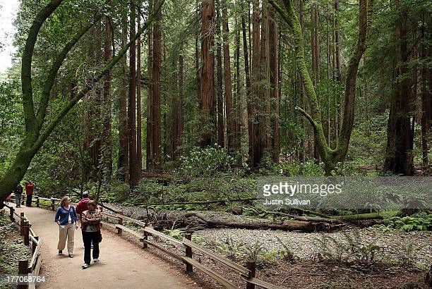 Visitors walk along a path of Coastal Redwood trees at Muir Woods National Monument on August 20 2013 in Mill Valley California A fouryear study by...