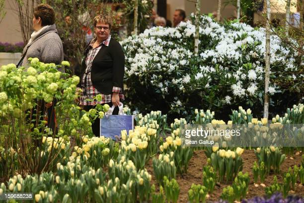 Visitors walk among flowers on display at the Holland stand at the 2013 Gruene Woche agricultural trade fair on January 18 2013 in Berlin Germany The...