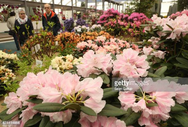 Visitors walk among rhododendrons at the IGA 2017 international garden exhibition on April 28 2017 in Berlin Germany The IGA includes horticultural...
