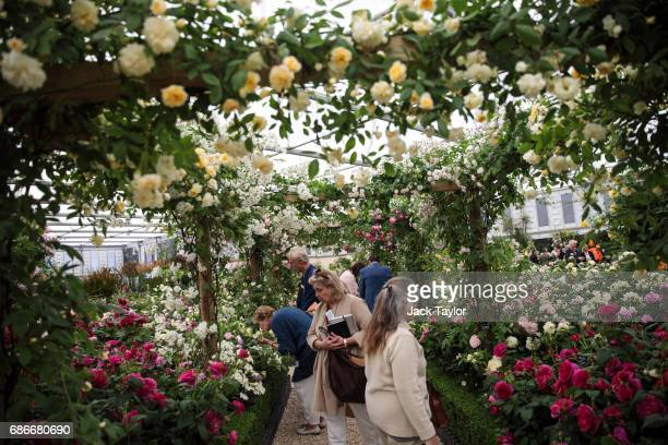 Visitors walk around a rose garden at the Chelsea Flower Show on May 22 2017 in London England The prestigious Chelsea Flower Show held annually...