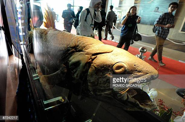 Visitors walk past a preserved specimen of a rare Coelacanth locally known as sea king caught in Manado bay in 2007 and displayed at the Grand...