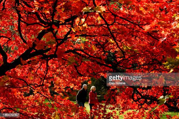 Visitors walk through Westonbirt Arboretum in the Cotswolds near Tetbury on October 26 2011 in Westonbirt England The National Arboretum experiences...