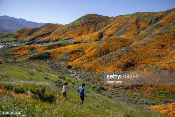 Visitors walk towards poppy fields during a 'super bloom' in Lake Elsinore California US on Saturday March 16 2019 California is free of drought for...