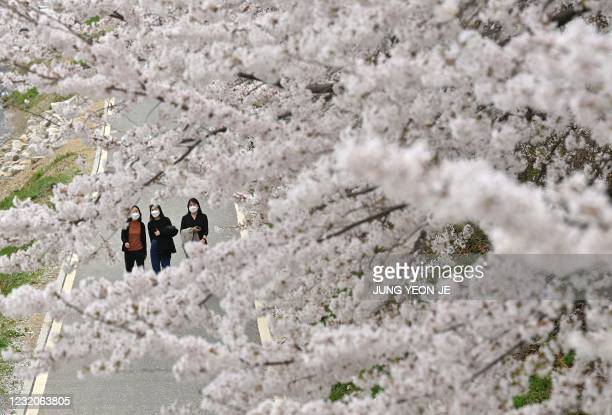Visitors walk under cherry blossoms in full bloom at a park in Seoul on April 2, 2021.