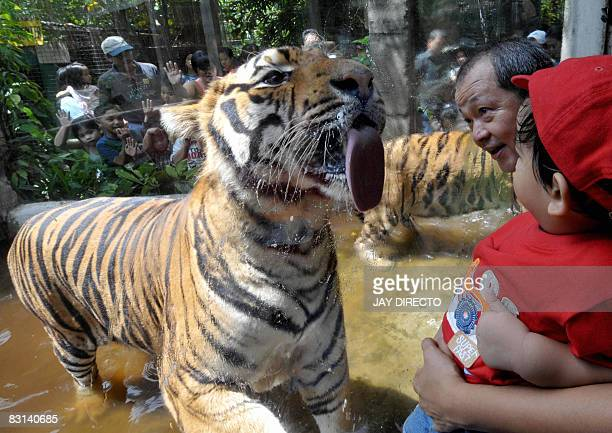 Visitors watch a Royal Bengal tiger at the Malabon Zoo suburban Manila on October 4 2008 Zoo owner Manny Tangco guide visitors who trooped to the the...
