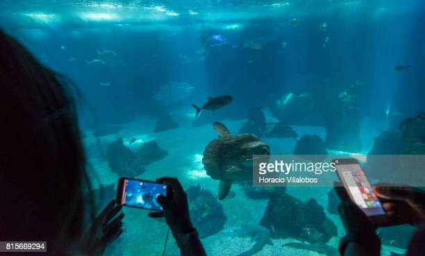 """Visitors watch a Sunfish, part of the permanent exhibit of """"One Planet, One Ocean"""", at the Oceanario de Lisboa on July 16, 2017 in Lisbon, Portugal...."""