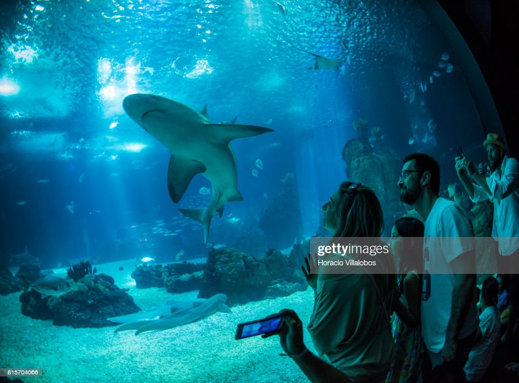 Lisbon Oceanarium Receives Over One Millon Visitors Per Year And Is A Main Tourist Attraction : News Photo