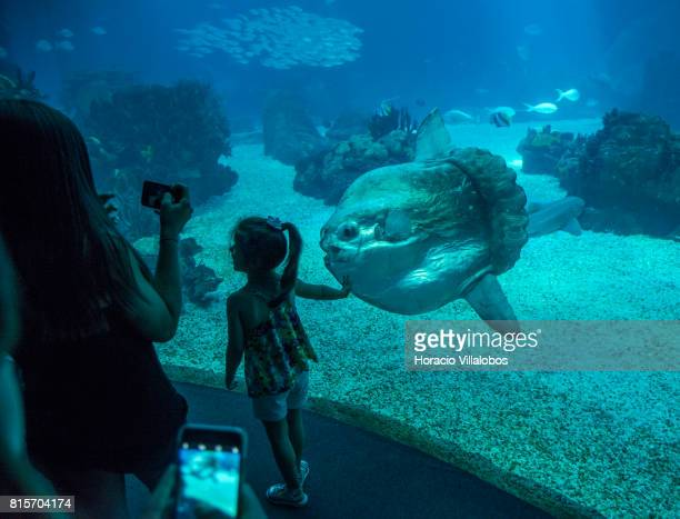 Visitors watch and photograph a Sunfish part of the permanent exhibit of One Planet One Ocean at the Oceanario de Lisboa on July 16 2017 in Lisbon...