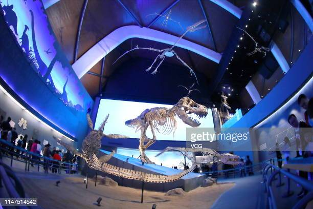 Visitors watch dinosaur fossils at the National Maritime Museum on May 1 2019 in Tianjin China The threestory museum with an area of 150000 square...