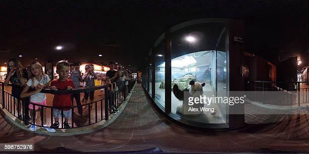 Visitors watch giant panda Tian Tian in his enclosure at the David M Rubenstein Family Giant Panda Habitat of the Smithsonian National Zoological...