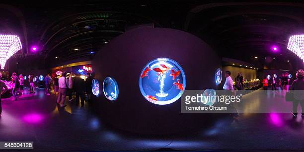 Visitors watch goldfish in tanks at the 'Art Aquarium 2016' exhibition at the Nihonbashi Mitsui Hall on July 7 2016 in Tokyo Japan At the exhibition...