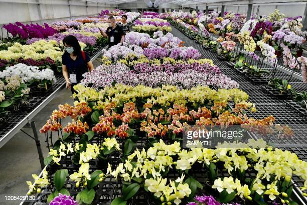 Visitors wear face masks as they walk by orchid flowers at the Char Ming Agriculture showroom in Tainan southern Taiwan on March 6 2020