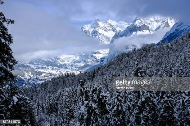 A vista across the forests above Grindelwald towards the Mättenberg and the Wetterhorn mountains