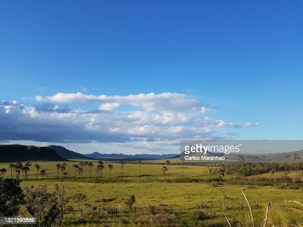 vista panorâmica da vegetação do cerrado - brazil stock pictures, royalty-free photos & images