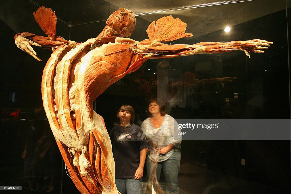 Vistors view a plastinated human body at pictures getty images vistors view a plastinated human body at body worlds 3 the anatomical exhibition ccuart Choice Image