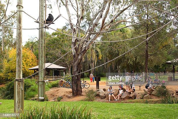 Vistors watch the spider monkeys at Taronga Western Plains Zoo on April 20 2012 in Dubbo Australia The popular 35 year old Dubbo zoo is set in 3...