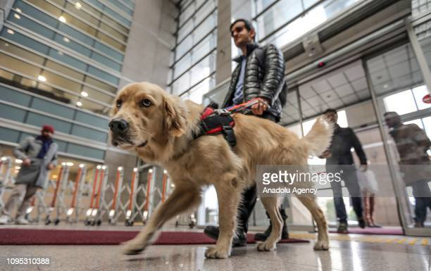 Visually impaired lawyer Mustafa Keskin and his guide dog Tabs walk in Istanbul's Caglayan Court on February 7 2019 Tabs helps his owner to find his...